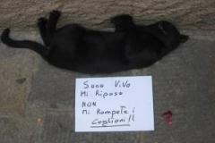 gatto-che-riposa